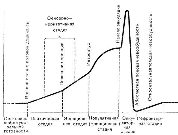 Копулятивный цикл мужчины
